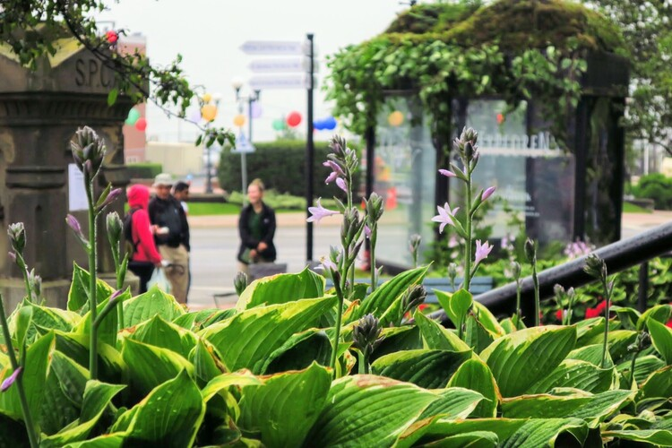 From Bus Stop to Must-Stop Park Oasis Image